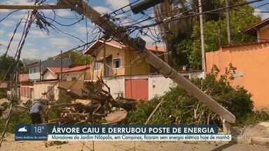 Moradores ficam sem energia elétrica após árvore cair e derrubar poste em Campinas - A árvore foi retirada do local pelo Departamento de Parques e Jardins da Prefeitura, e a situação foi normalizada no Jardim Nilópolis no início da tarde.