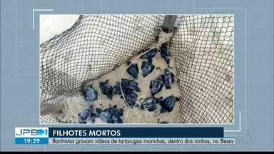 Banhistas gravam vídeos de filhotes de tartaruga mortos, dentro dos ninhos, no Bessa - Todos eles estavam dentro dos cercadinhos que protegem os ovos.