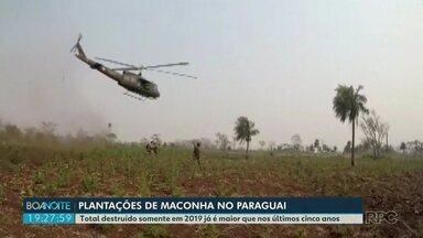 Operações no Paraguai ajudam a evitar que a maconha do país vizinho chegue ao Brasil - Trabalho de repressão é uma parceria entre os dois países.