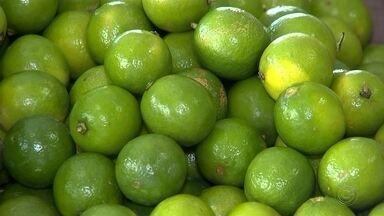Preço do limão aumenta na região de Itapetininga - A falta do limão no mercado tem feito os preços aumentarem. Em alguns lugares, em Tatuí (SP), o preço do quilo do limão custando o dobro do normal.
