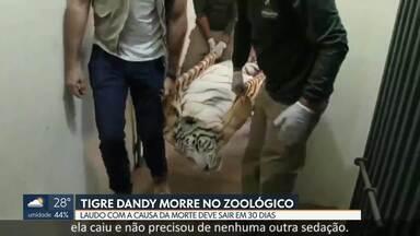 Tigre-de-bengala morre no Zoológico de Brasília - Tigre doou sangue para irmã antes de morrer. Zoológico diz que doação não tem relação com morte.