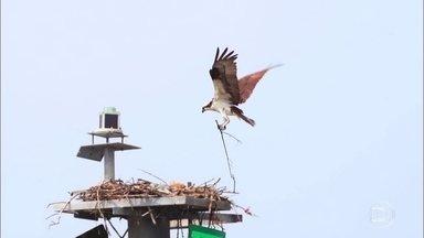 Baía em Nova York é área de preservação com mais de 300 espécies de aves - Biólogo Don Riepe leva Jorge Pontual em passeio de barco pela Baía de Jamaica, que já foi área muito poluída pelo uso de pesticidas nas lavouras, mas vem se recuperando