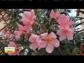 Estação da Primavera segue até o mês de dezembro - Flores ficam cheia de vida entre o inverno e o verão.