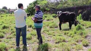 Milho fica em falta na Conab e preocupa criadores - Milho fica em falta na Conab e preocupa criadores