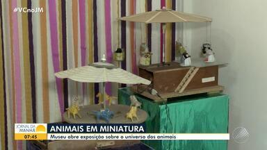 JM no Campo: museu em Feira de Santana exibe animais em miniatura - Exposição aborda o universo dos bichos no Museu Casa do Sertão.
