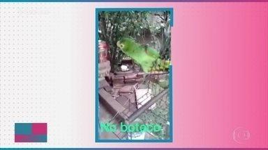 Divirta-se com os papagaios artistas - Tem capoeirista, bailarino, cantor e muito mais!
