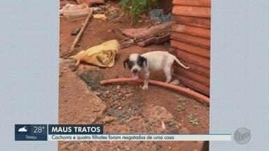 Cachorra e 4 filhotes em situação de maus-tratos são resgatados em Guaíra, SP - Um dos cãezinhos não resistiu. Morador responsável pelos animais não foi localizado.