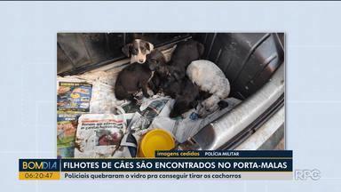 Filhotes de cachorros foram encontrados dentro de porta-malas de carro - A polícia teve que quebrar os vidros do carro para resgatar os cachorros.
