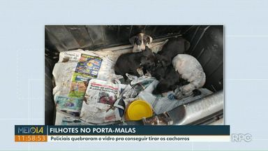 Policiais quebram vidro de carro para resgatar filhotes de cachorros - Filhotes estavam no porta-malas.