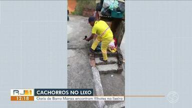 Garis resgatam filhotes de cachorro dentro de saco de lixo em Barra Mansa - Animais estavam enrolados em roupas e foram salvos momentos antes de serem colocadas na caçamba.