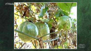 Fábrica para processamento de frutas deve beneficiar produtores em Dianópolis - Fábrica para processamento de frutas deve beneficiar produtores em Dianópolis