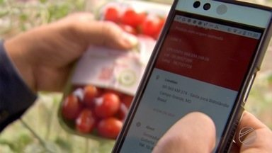 Novas regras do MAPA para comercialização de vegetais começam a ser implementadas - Novas regras do MAPA para comercialização de vegetais começam a ser implementadas