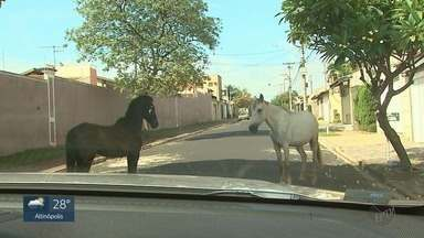 Cavalos soltos nas ruas colocam motoristas em risco no Jardim Palmares em Ribeirão Preto - Animais também estão machucados e maltratados.
