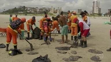 Governo federal proíbe pesca de lagosta e camarão em áreas atingidas pelo óleo - Um dos santuários da vida marinha, o arquipélago de Abrolhos, no sul da Bahia, também pode estar ameaçado.
