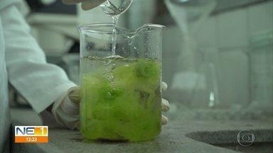 Pesquisadores da UFPE desenvolvem manta de algas para ajudar a conter óleo - Expectativa é que manta biodegradável esteja pronta no próximo ano.