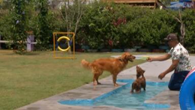 Playpet no Parque Max Feffer, em Suzano, ganha piscina para cães - O Parque Max Feffer fica na Avenida Senador Roberto Simonsen, 340, no Jardim Imperador.