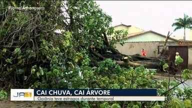 Chuva derruba árvores em Goiânia - Prefeitura diz que várias árvores caíram em vários pontos da capital.