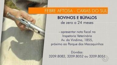 Começa campanha contra a febre aftosa no RS - Vacinas precisam ser adquiridas em agropecuárias cadastradas.