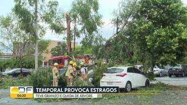 Temporal provoca estragos com ventos de até 64km/h - Teve granizo e queda de árvore. Defesa Civil emitiu alerta.