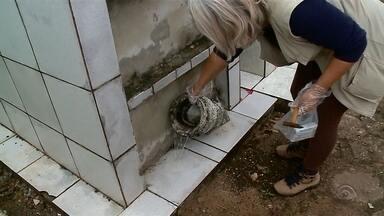 Caso de Dengue autóctone é registrado em Passo Fundo - Período com chuvas e altas temperaturas traz alerta para doença.