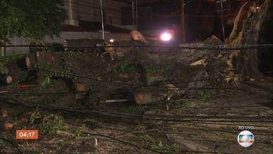 Árvore cai e bloqueia parte de importante avenida do centro de São Paulo - Árvore caiu na avenida Brigadeiro Luís Antônio, próximo ao Parque do Ibirapuera. Ainda não há previsão para a liberação da via.
