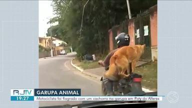 Cachorro se equilibra em garupa de moto em Paty do Alferes - Ação é considerada infração grave e passível de multa, segundo o código de trânsito.