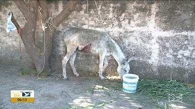 Número de animais abandonados nas ruas cresce no Maranhão - Por consequência, também aumentaram os casos de maus tratos contra os animais no estado.