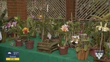 Orquidário de Santos promove programação de aniversário - Nesta sexta-feira (8), o parque oferece uma feira de orquídeas.