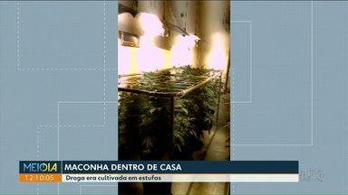 Polícia apreende mais de mil pés de maconha em casas de Curitiba - A droga estava sendo cultivada em estufas.
