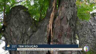 Prefeitura vai remover árvore no Centro de Campos, no RJ - Árvore está em condições precárias e fica perto do Hospital Plantadores de Cana.