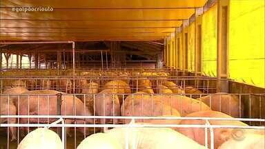 Seis frigoríficos são habilitados pelo Ministério da Agricultura para exportar para China - Empresas comercializam suínos e frangos.