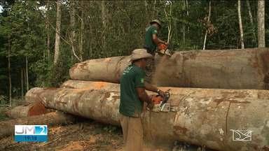 Amazônia Maranhense: Zona de Risco - 30 anos de conflito entre índios e madeireiros - Primeira reportagem da série fala sobre as três décadas de desmatamento da floresta amazônica e as consequências para os povos indígenas.