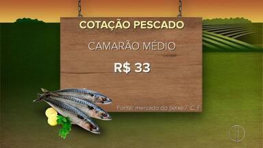 Confira a cotação para o pescado nesta semana - Assista a seguir.