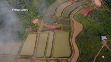 Assista a íntegra do Amazônia Rural deste domingo (2) - Assista a íntegra do Amazônia Rural deste domingo (2)..