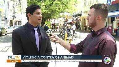 Especialista explica como funciona lei em casos de maus tratos aos animais - Na terça-feira, um cachorro foi espancado em Valença. Advogado tira dúvidas de como ajudar nestes casos.