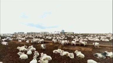 Com disparada no preço da arroba, Mato Grosso aumenta o gado confinado - Estado resgistrou alta de 390% nas exportações para China. Fazenda planeja segurar os animais por mais tempo, de olho na demanda do fim do ano.
