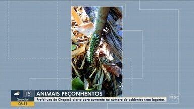 Prefeitura alerta para aumento no número de acidentes com lagartas peçonhentas em Chapecó - Prefeitura alerta para aumento no número de acidentes com lagartas peçonhentas em Chapecó