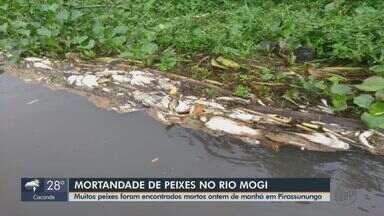 Grande quantidade de peixes mortos aparece às margens do rio Mogi Guaçu em Pirassununga - Polícia Ambiental informou que registrou a denúncia e irá acionar a Cetesb.