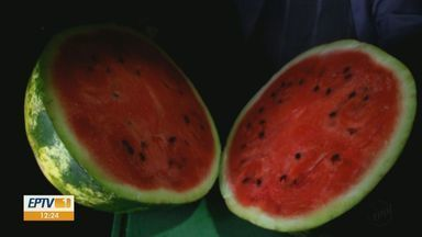 Faz Bem: Confira dicas de frutas e legumes para incrementar alimentação - Em dias quentes é preciso redobrar atenção para evitar a desidratação.