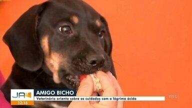 Amigo Bicho: cuidados com a lágrima ácida - Amigo Bicho: cuidados com a lágrima ácida