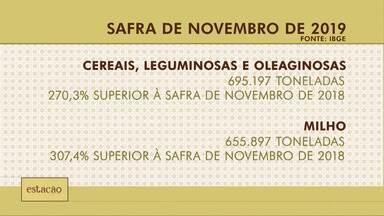IBGE divulga estimativa da safra de novembro - IBGE divulga estimativa da safra de novembro.