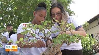 Alunos de escola estadual cultivam plantas e bonsais - Espaço verde é o xodó dos estudantes da unidade, localizada no Recife.