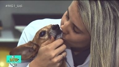 Tratamentos neurológicos auxiliam cães a recupera de condições adversas - Confira a história emocionante de um cãozinho que teve problemas na coluna e, depois de tratamento com veterinário especialista em neurologia, conseguiu voltar a andar.