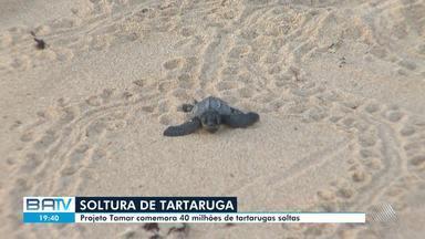 Projeto Tamar comemora soltura de quarenta milhões de tartarugas monitoradas pelo grupo - Tartarugas foram os animais mais afetados pela crise do óleo que assolou o litoral nordestino nos últimos três meses.