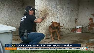Polícia encontra mais um canil clandestino na região de Curitiba - O dono do local foi preso numa operação que investiga rinha entre cães em São Paulo