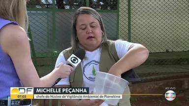 Agentes da secretaria de Saúde e Bombeiros vão instalar armadilhas contra mosquito - A ação vai começar em Planaltina, na área do Arapoanga, por apresentar o maior número de casos de dengue este ano. Serão 4 mil na cidade e 8 mil em todo o DF.