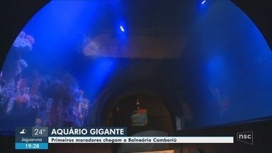 Aquário gigante será inaugurado em Balneário Camboriú - Aquário gigante será inaugurado em Balneário Camboriú