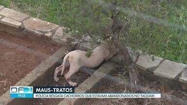 Polícia Ambiental resgata cães abandonados em casa no Taquari - Os cães são da raça pitbull. Dois adultos e quatro filhotes que sofriam maus-tratos. Durante a ação da polícia, os donos da casa não foram encontrados.