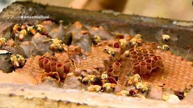 Parceria entre índios e pesquisadores ajuda a preservar abelhas no Amazonas - Índios diversificaram plantios para aproveitar melhor a área.