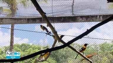 Mais de 300 animais silvestres são trazidos de São Paulo para Pernambuco - Os bichos foram vítimas de tráfico ou entregues por pessoas que decidiram doar